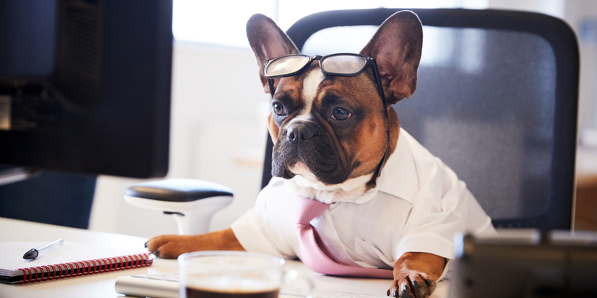 Tips for celebrating Take Your Dog to Work Day